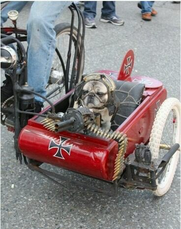 WTF – a French bulldog as the Red Baron?